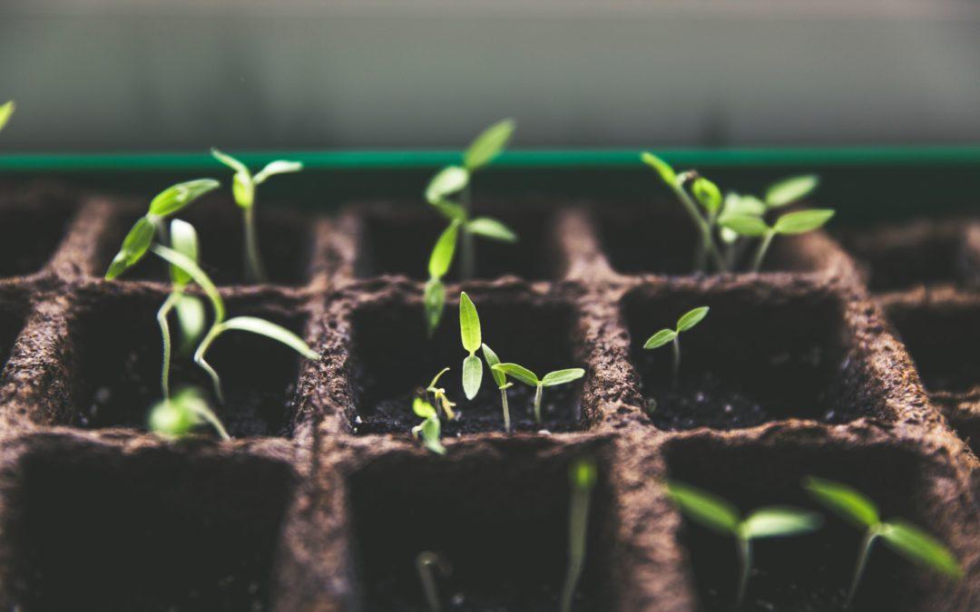Gospel Over Growth